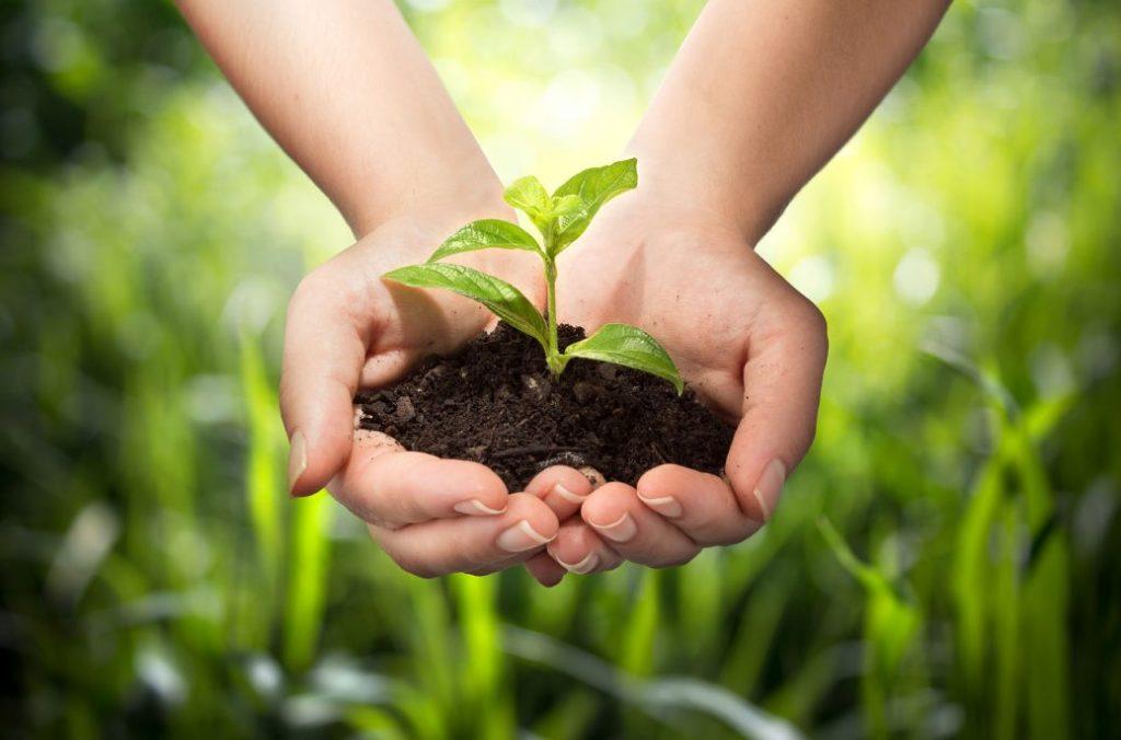 Ce este agricultura ecologica?